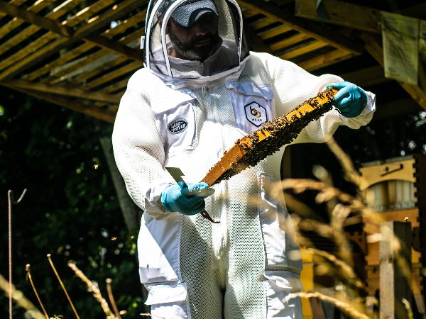EXPERIENCED BEEKEEPERS WANTED FOR SOLIHULL'S ON-SITE APIARY