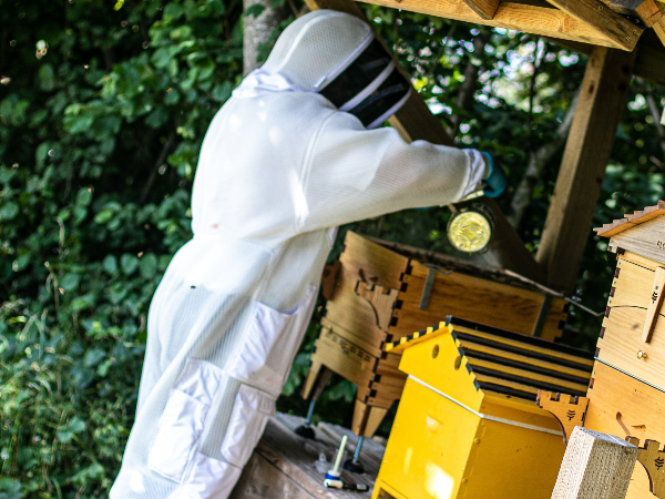 JAGUAR LAND ROVER'S BUSY BEES GATHER  FIRST HONEY HARVEST