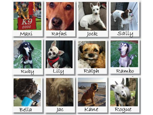 Halewood's Top Dog - vote now